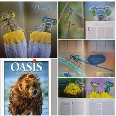 Oasis 208